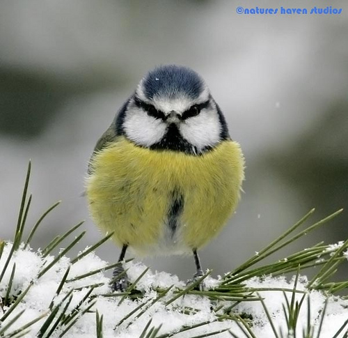 Showcase of the Week - Bird Photographer Julia