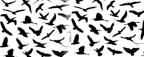30 Flying Birds Photoshop Brushes
