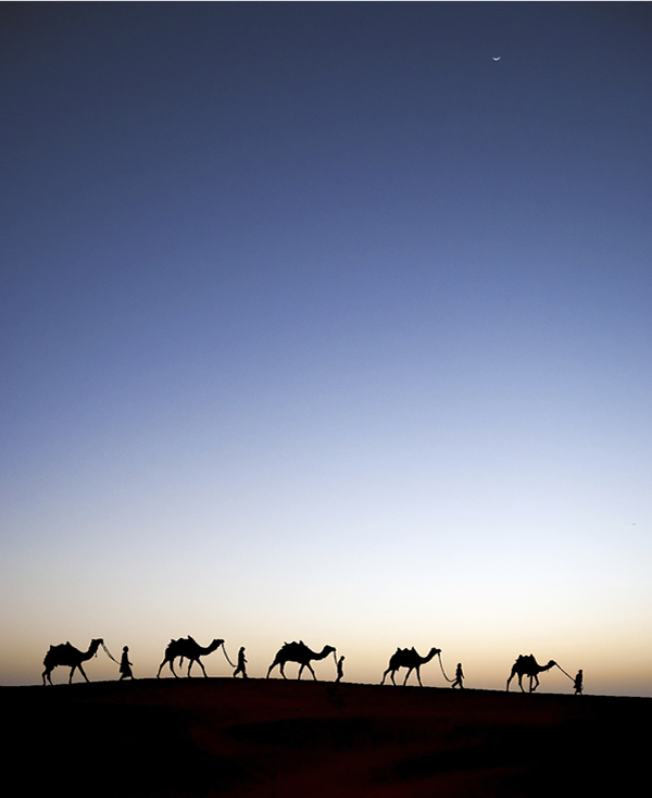 An evening shot in Thar, India