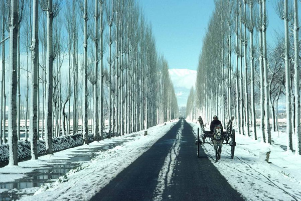 A farmer on the long road to Kashmir, India