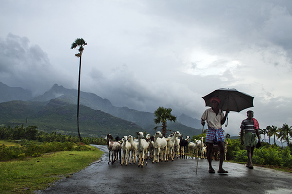 Rural India - Thenkasi, Tamilnadu, India.