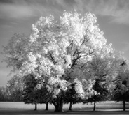 infrared_effect_thumb