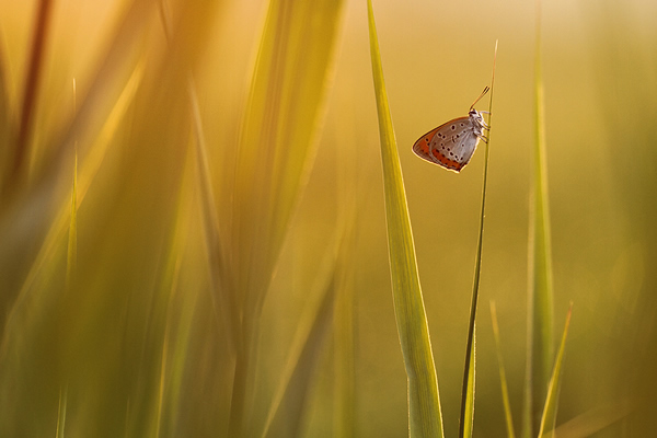 Butterfly in first sunlight - Photography Composition