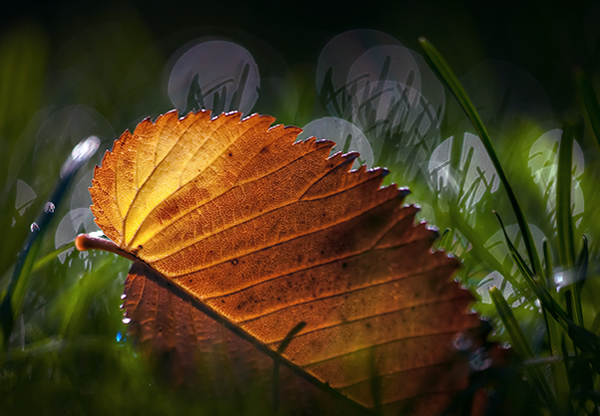 Fallen - Beautiful and Colorful Autumn Leaves Photography