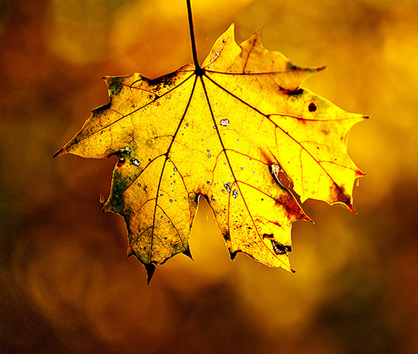 Autumn Color - Beautiful and Colorful Autumn Leaves Photography