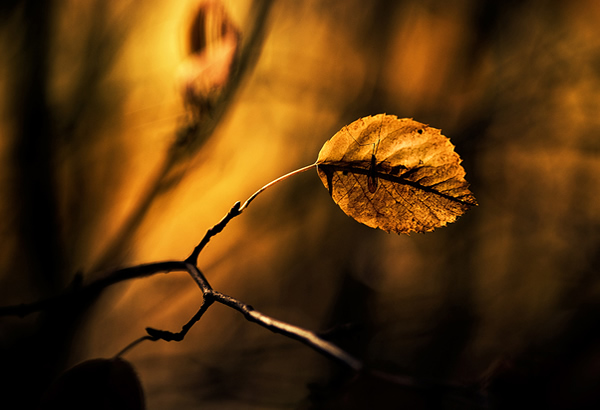 Golden Light - Beautiful and Colorful Autumn Leaves Photography