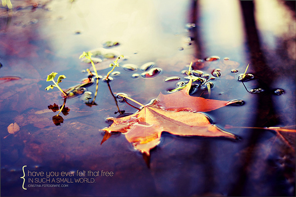 So light that if you leave. You may not return - Beautiful and Colorful Autumn Leaves Photography