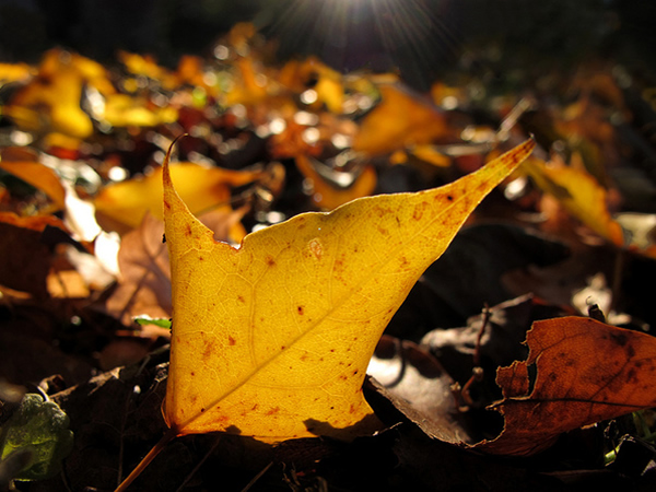 Catching the Light - Beautiful and Colorful Autumn Leaves Photography