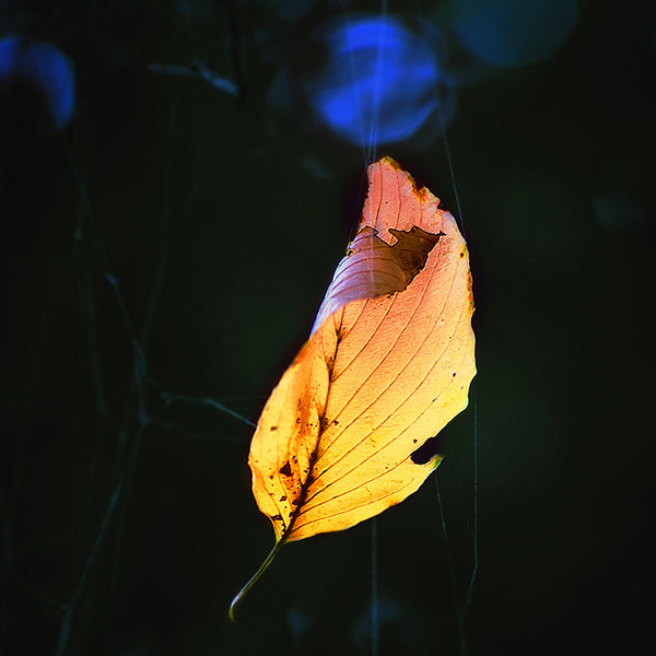 Till the coldness comes - Beautiful and Colorful Autumn Leaves Photography