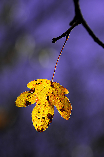The fall - Beautiful and Colorful Autumn Leaves Photography