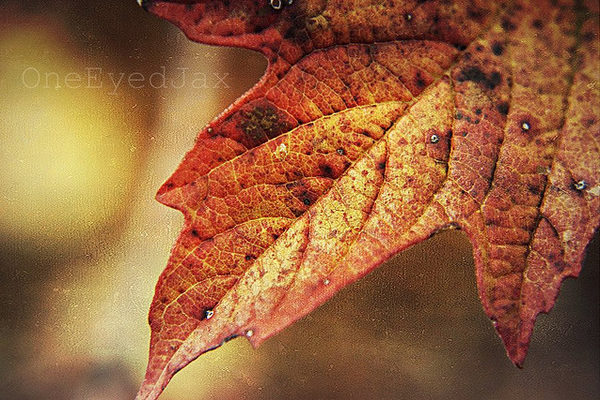 We change, whether we like it or not - Ralph Waldo Emerson - Beautiful and Colorful Autumn Leaves Photography