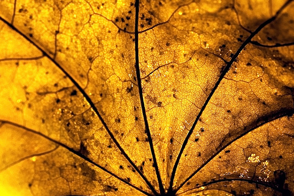 Veinal - Beautiful and Colorful Autumn Leaves Photography