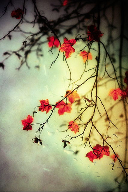 Autumn - Beautiful and Colorful Autumn Leaves Photography