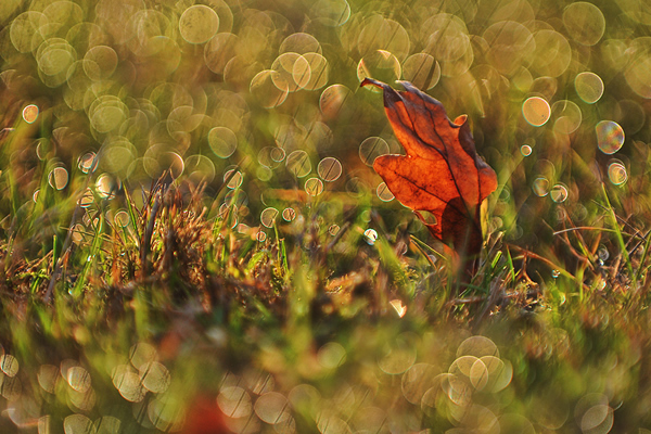 Autumn Bokeh - Beautiful and Colorful Autumn Leaves Photography