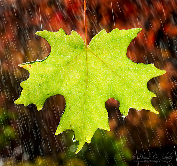 Autumn Shower - Beautiful and Colorful Autumn Leaves Photography