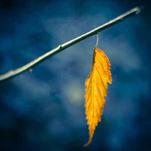 One last leaf - Beautiful and Colorful Autumn Leaves Photography