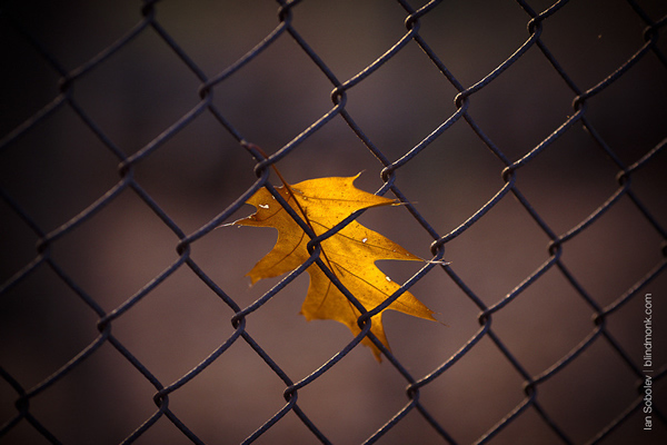 Trapped for Winter - Beautiful and Colorful Autumn Leaves Photography