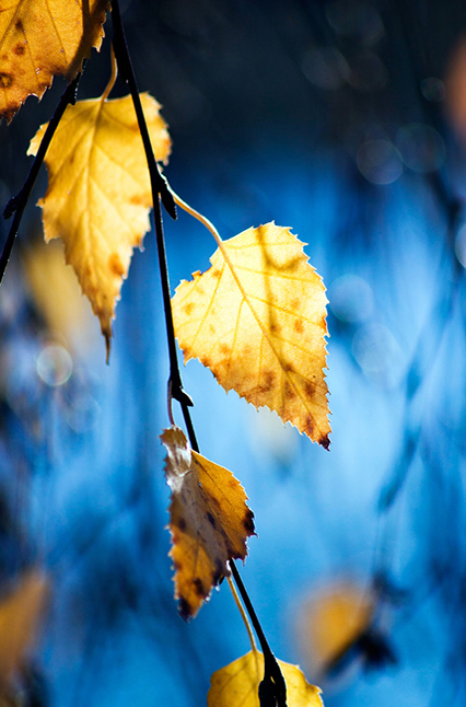 Autumn Leaves - Beautiful and Colorful Autumn Leaves Photography