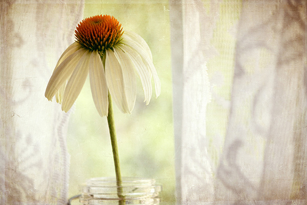 Creative Texture Photography by Pamela Schmieder