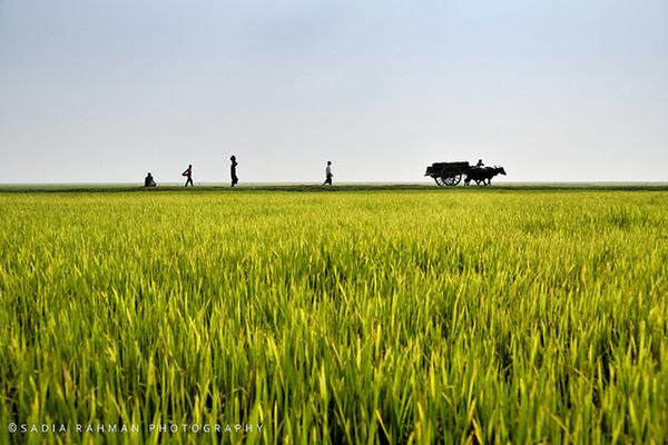 Beautiful Bangladesh – Amazing and Inspiring Photographs