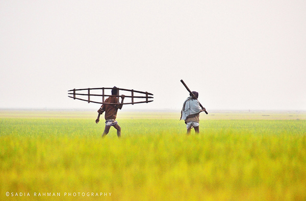 Farmers of the Farmland - Shunamgonj, Bangladesh