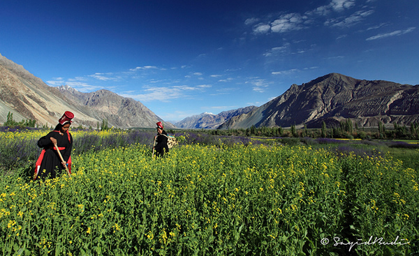 The Fertile Land of Nubra Valley - Ladakh, India