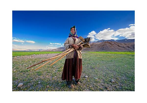 Lady Farmer - Korzok, Ladakh, India
