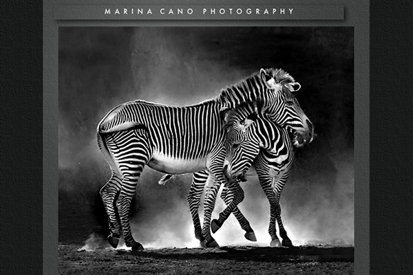 Marina Cano  - 25 Inspiring Portfolio Websites of Wildlife Photographers