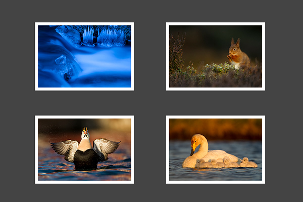 Danny Green - 25 Inspiring Portfolio Websites of Wildlife Photographers
