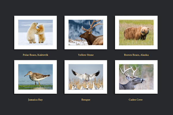 Siddhardha Garige - 25 Inspiring Portfolio Websites of Wildlife Photographers