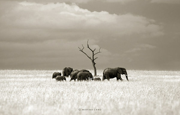 Interview with Wildlife Photographer Marina Cano