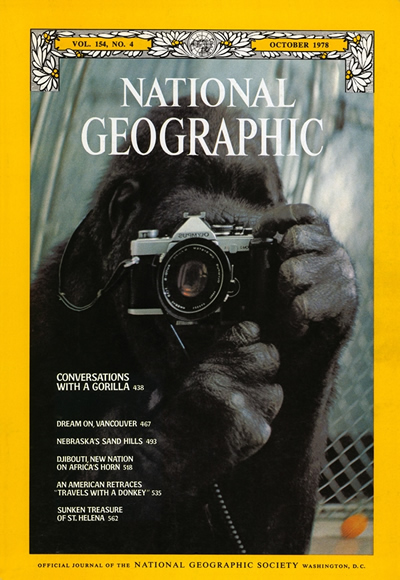 The Best of National Geographic Magazine Covers  - October 1978 - Conversations with a Gorilla
