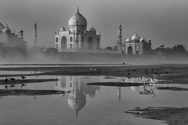Taj & Dog by Yaman Ibrahim