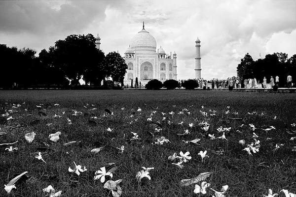 The Magical Taj with leaves and flowers by Soumya Bandyopadhyay