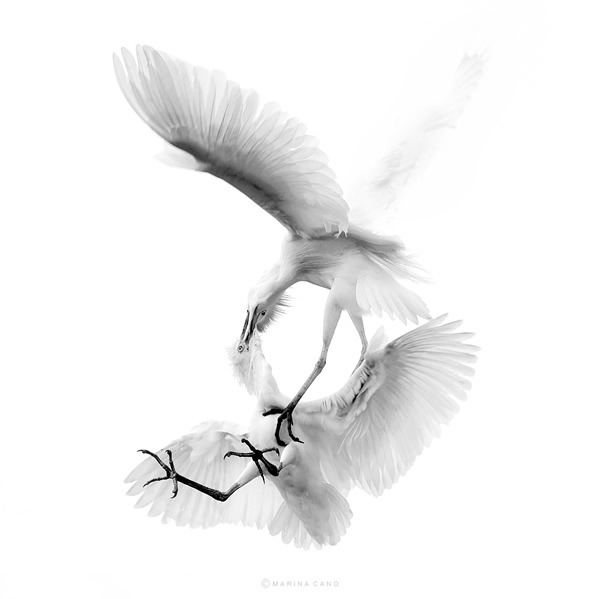 Beautiful Examples of Bird Photography - Lightness