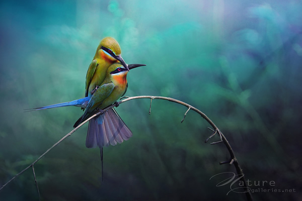 Beautiful Examples of Bird Photography - Couples birds