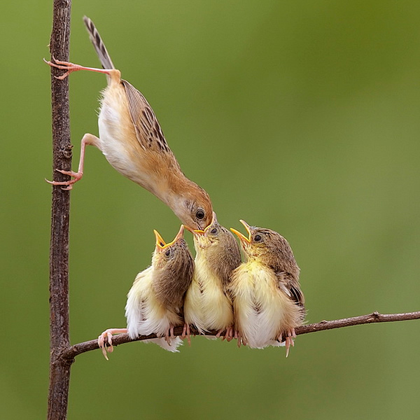 Beautiful Examples of Bird Photography - Oooo...Don't Eat My Face