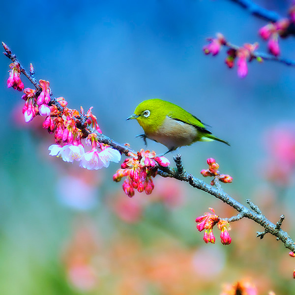 Beautiful Examples of Bird Photography - It will be soon