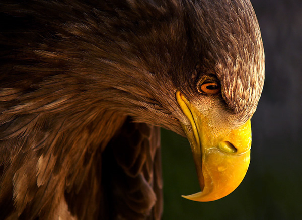 Beautiful Examples of Bird Photography - Eagle pursues prey