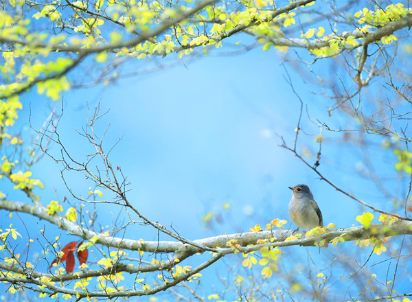 Beautiful Examples of Bird Photography - Spring is Here