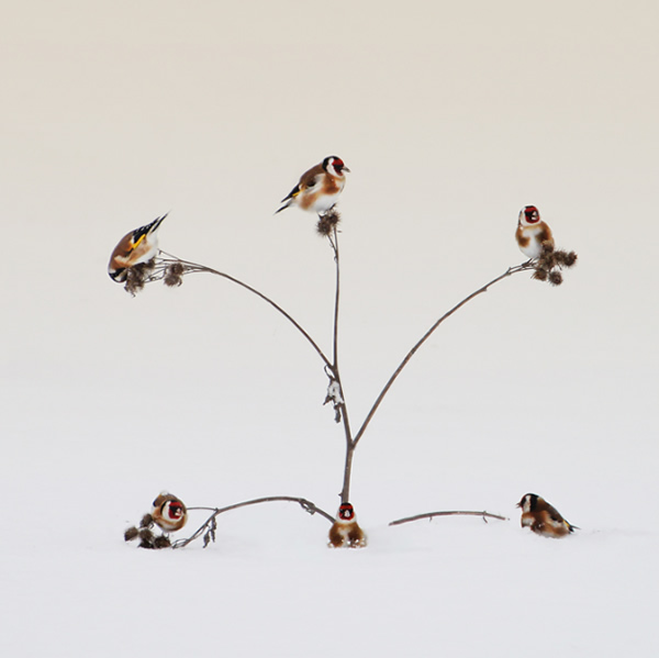 Beautiful Examples of Bird Photography - Occupied house