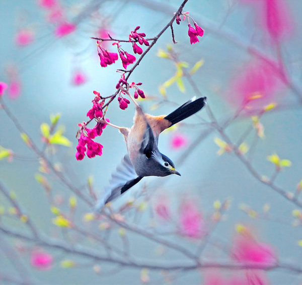 Beautiful Examples of Bird Photography - Dusk Dance