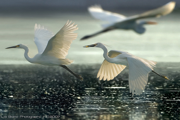Beautiful Examples of Bird Photography - Fly