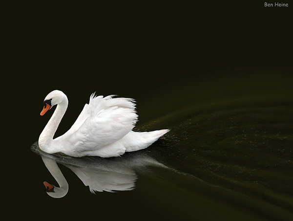 Beautiful Examples of Bird Photography - Not a Drifter but a Dreamer