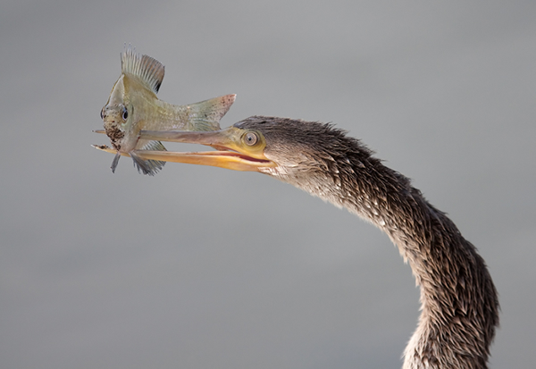 Beautiful Examples of Bird Photography - Oh Oh ... not looking good