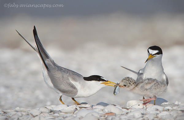 Interview with Bird Photographer Fabs Forns