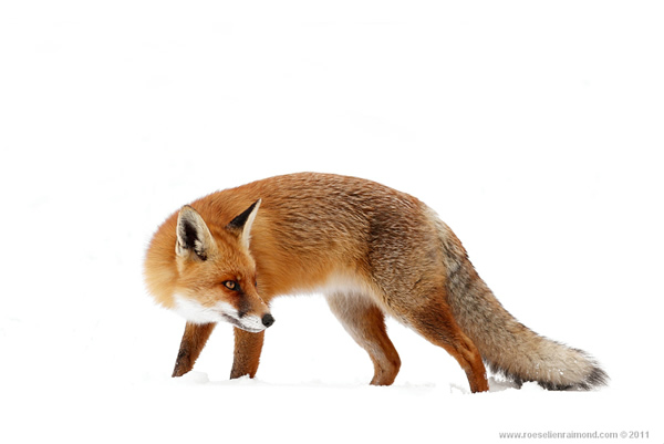 Roeselien Raimond - The Best Wildlife Photographer