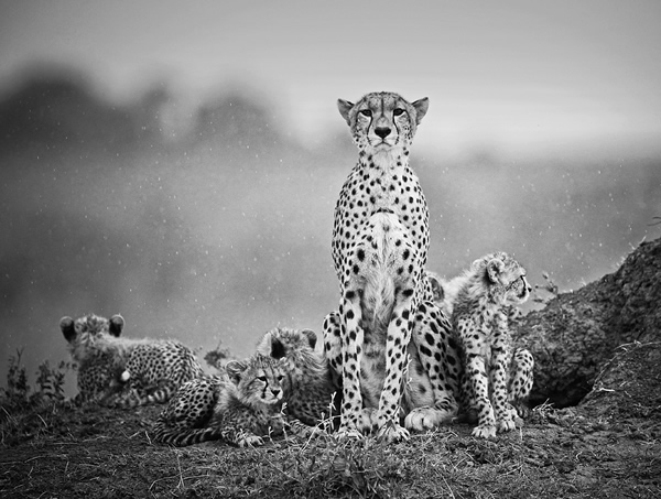 Stephen Earle - The Best Wildlife Photographer