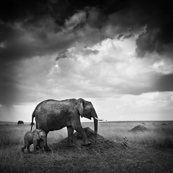 Urszula Kozak - The Best Wildlife Photographer