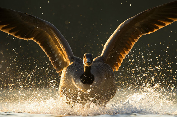 Andrew Parkinson - The Best Wildlife Photographer